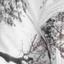 зимний лес (кусты)