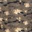 чёрный мох камо