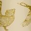 коричневый (птицы)
