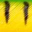 60 (жёлтый)