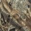 тростник-2